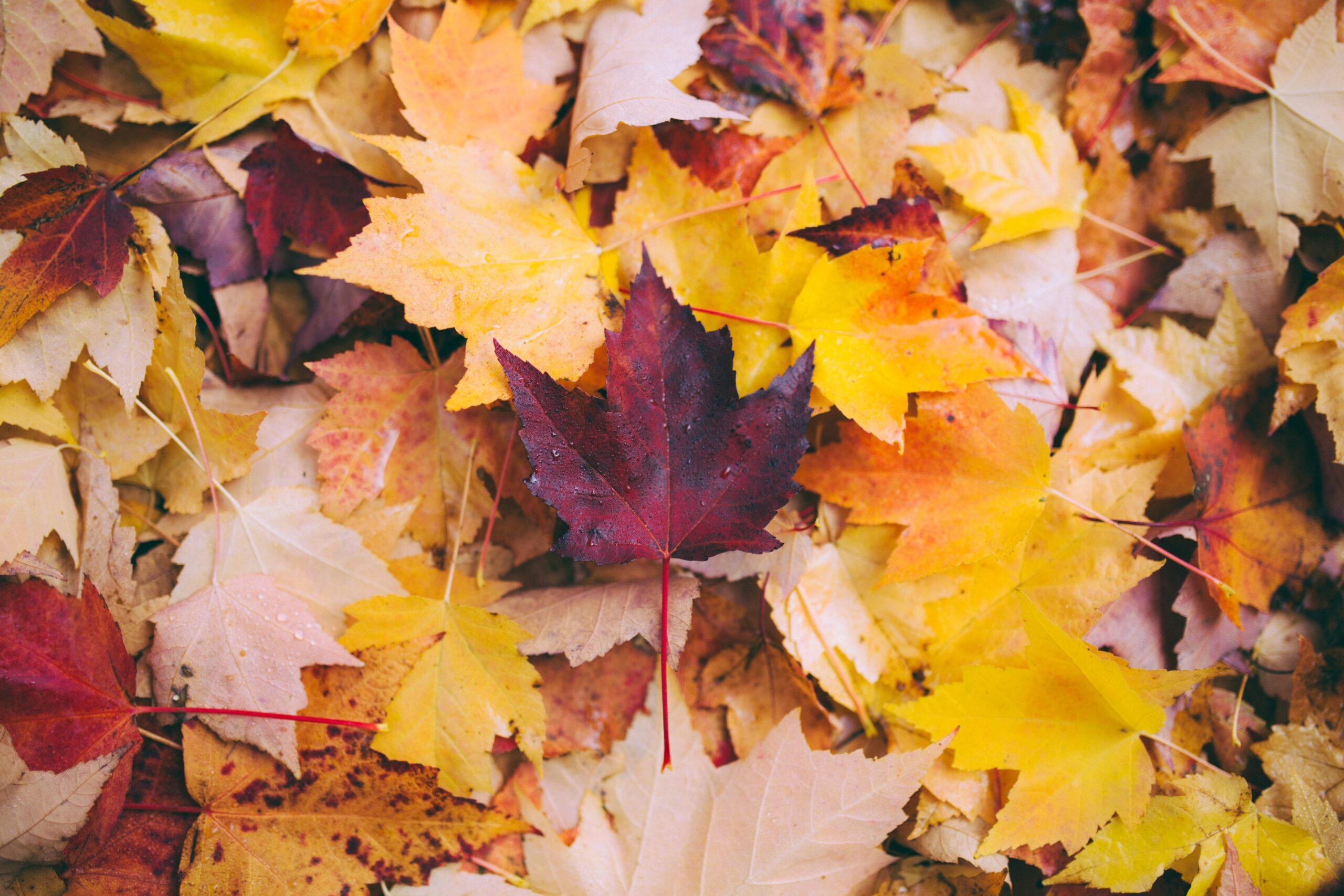Fall Term Begins Sept. 27th